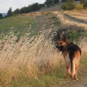 alex-cucciolo-14-voti